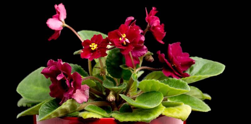 flori-care-se-potrivesc-in-casa