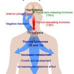 Tiroida si slabirea