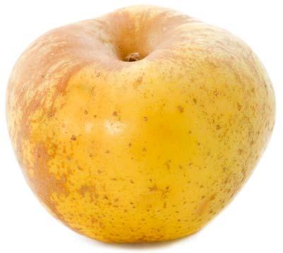 calorii-mar-golden