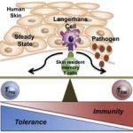 Cum functioneaza sistemul imunitar al pielii?