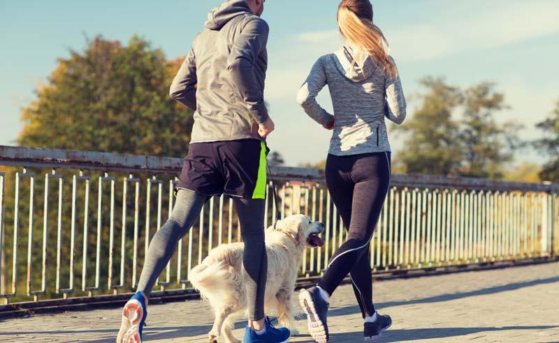 fa-exerciti-de-slabit-plimband-cainele