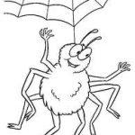 Cum scapam de paianjenii din casa?