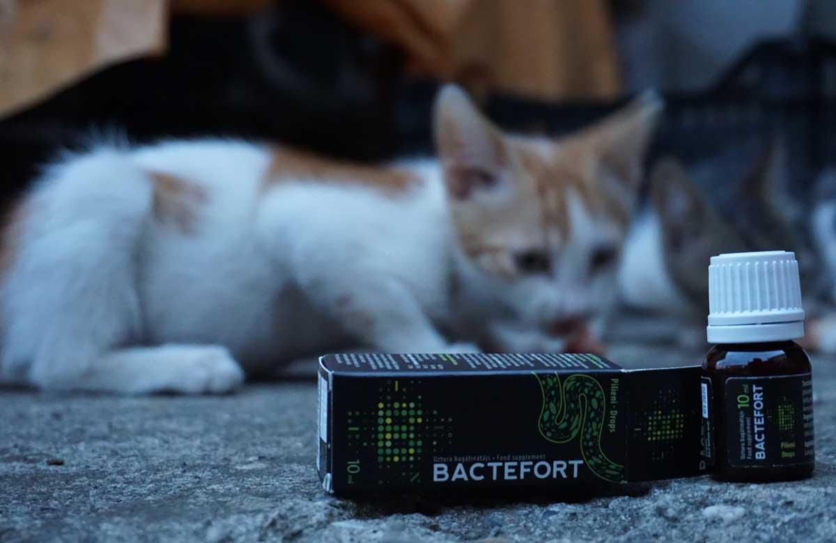 bactefort-paraziti-pisici