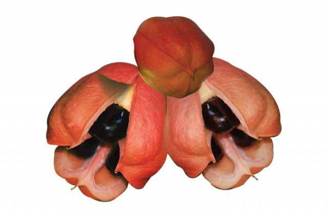 ackee fructe cu tepi