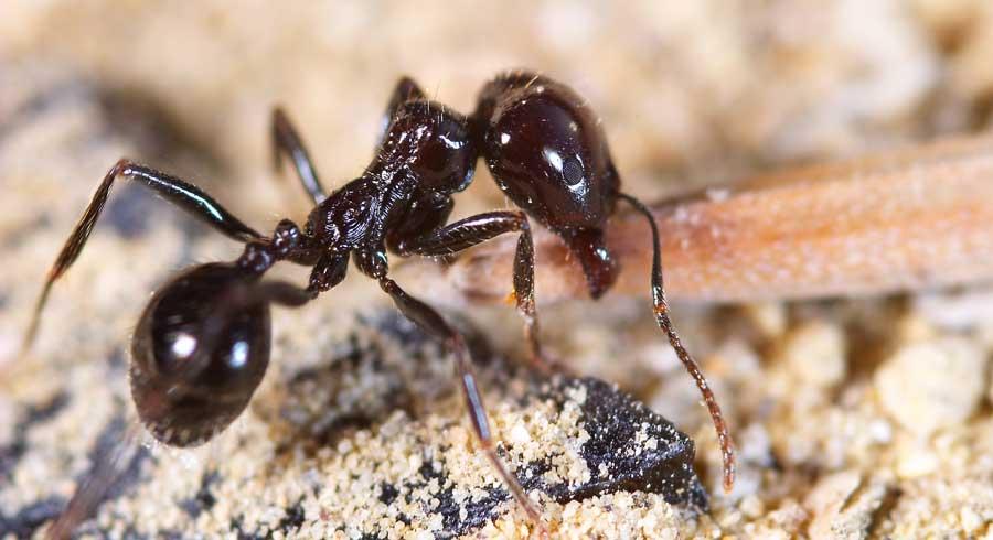 furnici-mancare