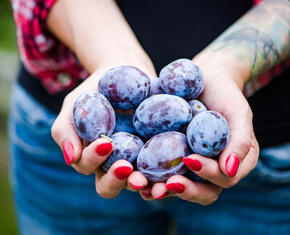 prunele sunt niste laxative naturale foarte bune