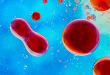 acid-folic-sistemul-imunitar