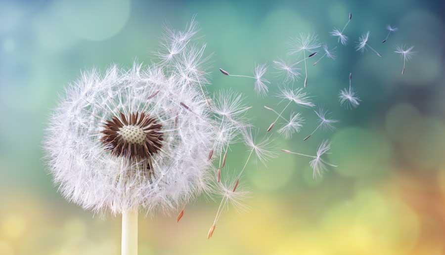 rinita-alergica-polen
