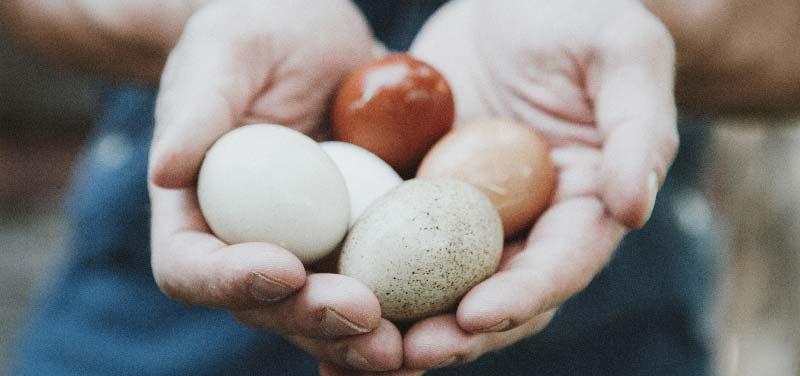 elementele dietei cu oua