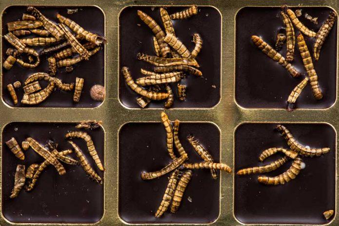 paraziti-intestinali