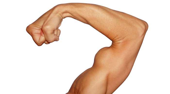 testosteron-biceps