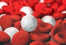 Celule albe si rosii