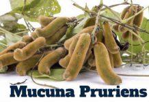 Mucuna-Pruriens tratament pentru potenta