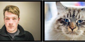 alergie-la-pisici