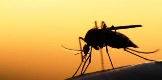 ce-este-virusul-west-nile-si-cum-ne-ferim-de-acesta