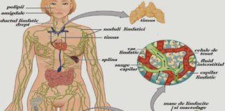 ce-este-sistemul-limfatic