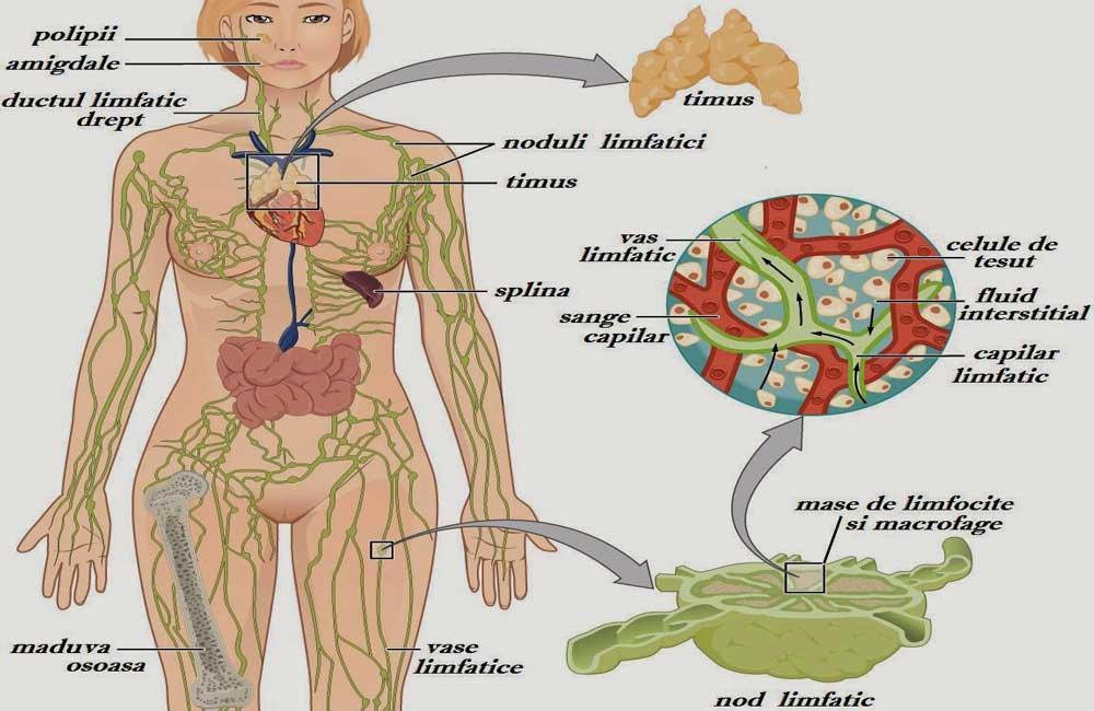 Limfedem ( Edem limfatic ): Cauze, simptome, tratament, complicatii | coronatravel.ro